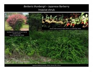 Photo Notebook ProjectBerberiscover