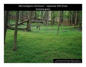 Photo Notebook ProjectJapStiltgrasscover