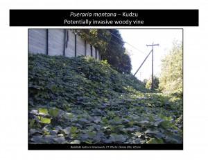 Photo Notebook ProjectKudzucover