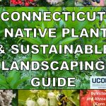 CT Native Plant and Sustainable Plant Guide